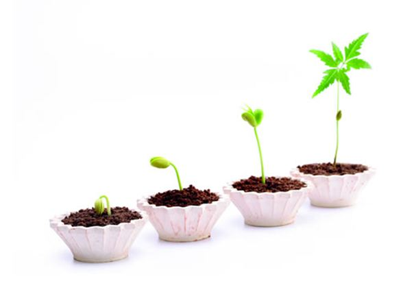 Methods to Successfully Grow Your Online business