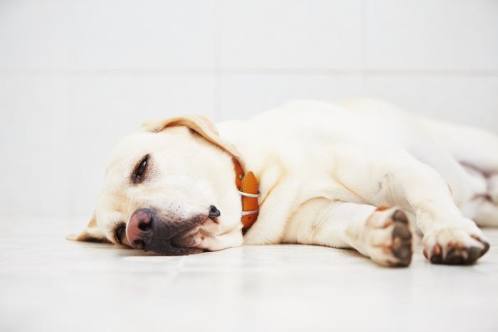 5 Step Procedure For Applying Pet Insurance
