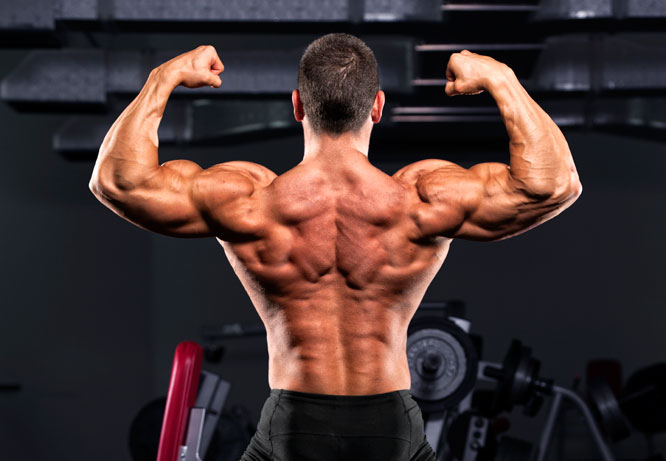 Muscle Growth With Trenbolone Acetate Cycle