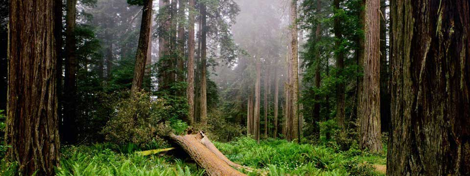 1293441583_nature_forest_morning_in_the_forest_015232_