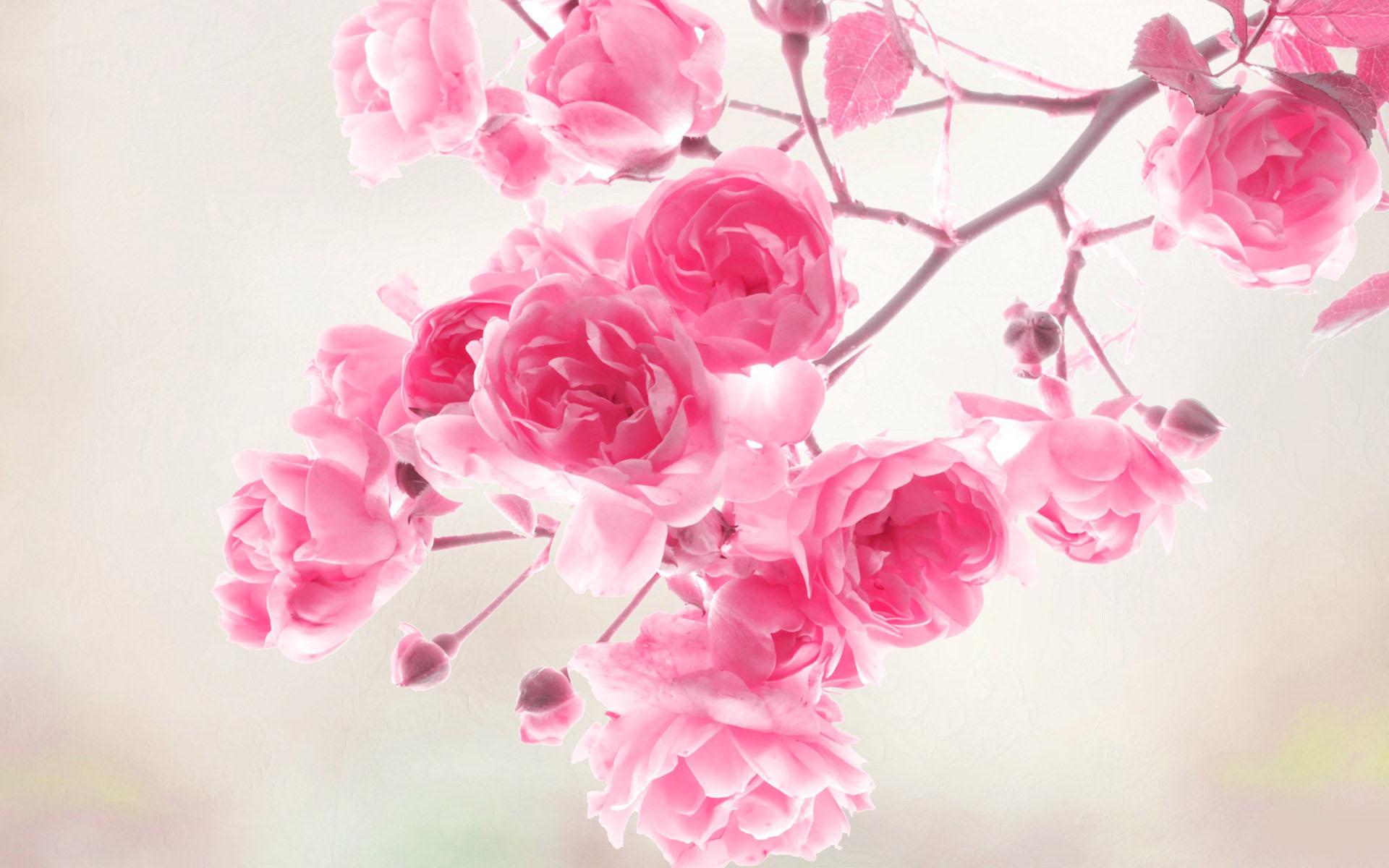 20-flower-wallpaper