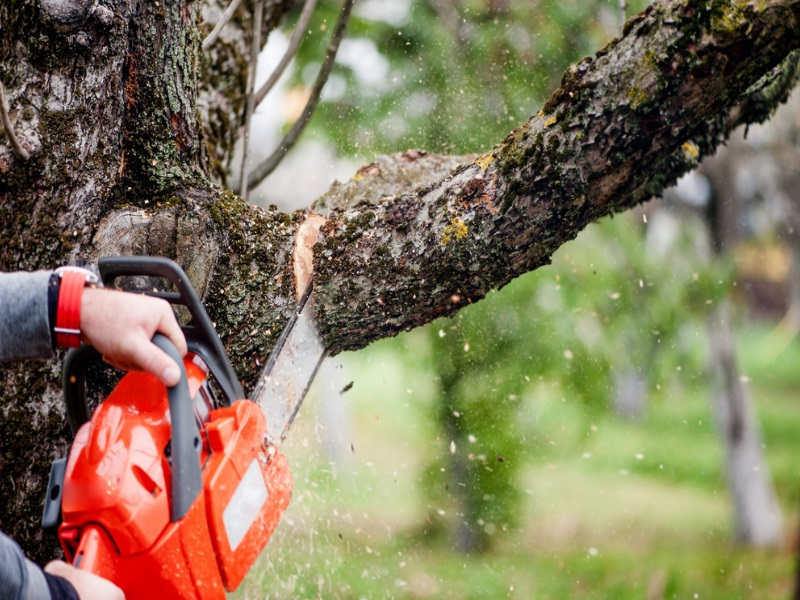 Tree Cutting – Advantages and Healthy Alternative
