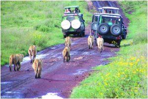 Discovering Wildlife in Tanzania