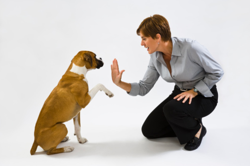 San Diego Mobile Pet Grooming Tips:  How To Choose The Right Dog Bowl