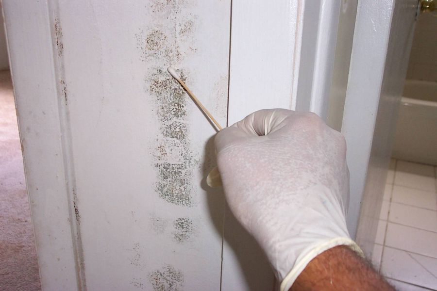 Detect Mould In Your Home