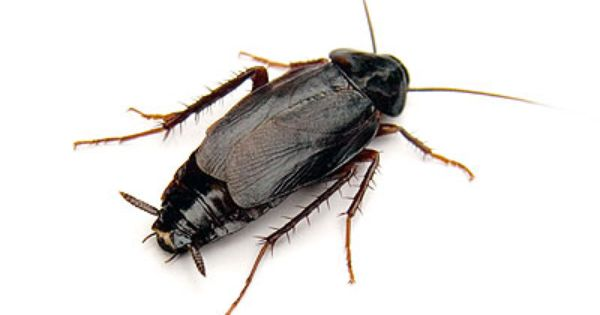 Get Best Pest Control Services In Waltham Forest To Eradicat Unwelcomed Pests