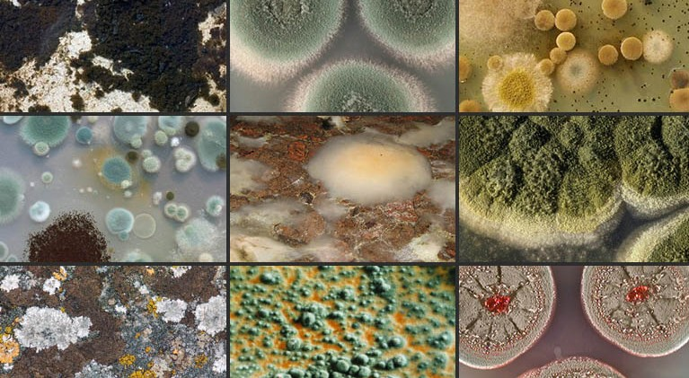 common-types-of-mold