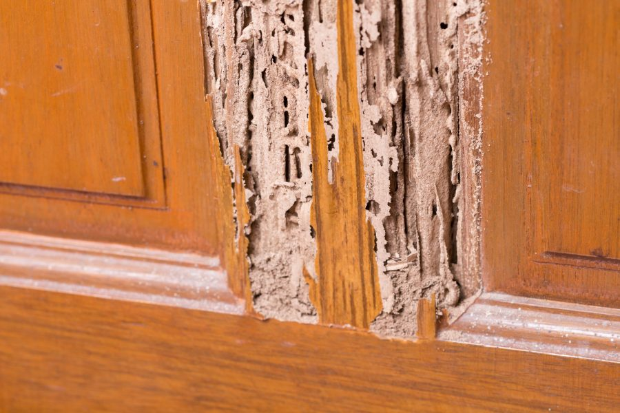 Dangers Of Improper Termite Pretreatment