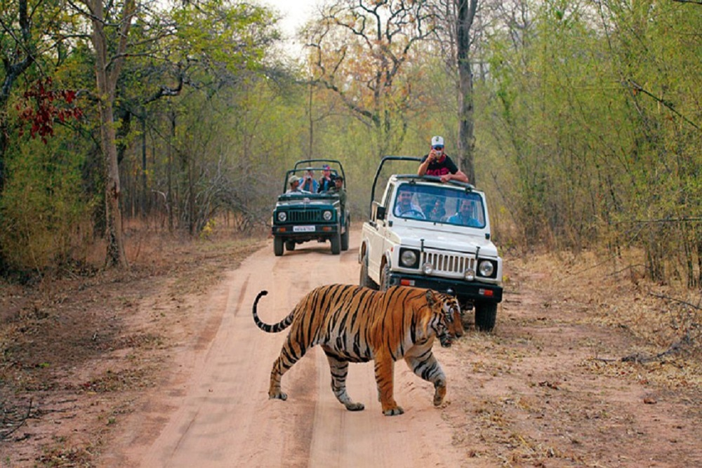 How To Enjoy The Jeep Safari In Jim Corbett National Park?