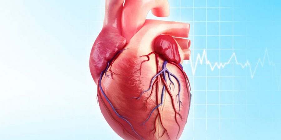 All You Need To Know About The Causes, Symptoms, Treatment, And Prevention Of Heart Diseases